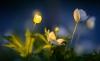 http://www.thegreatnext.com/Prabalmachi Panvel Mumbai Maharashtra Trekking Fireflies The Great Next