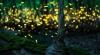 http://www.thegreatnext.com/Rajmachi Lonavala Mumbai Fireflies Trekking Sahyadris Forests Night The Great Next