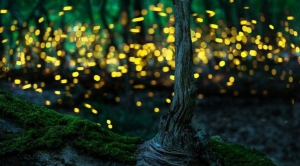 Rajmachi Fireflies Trek