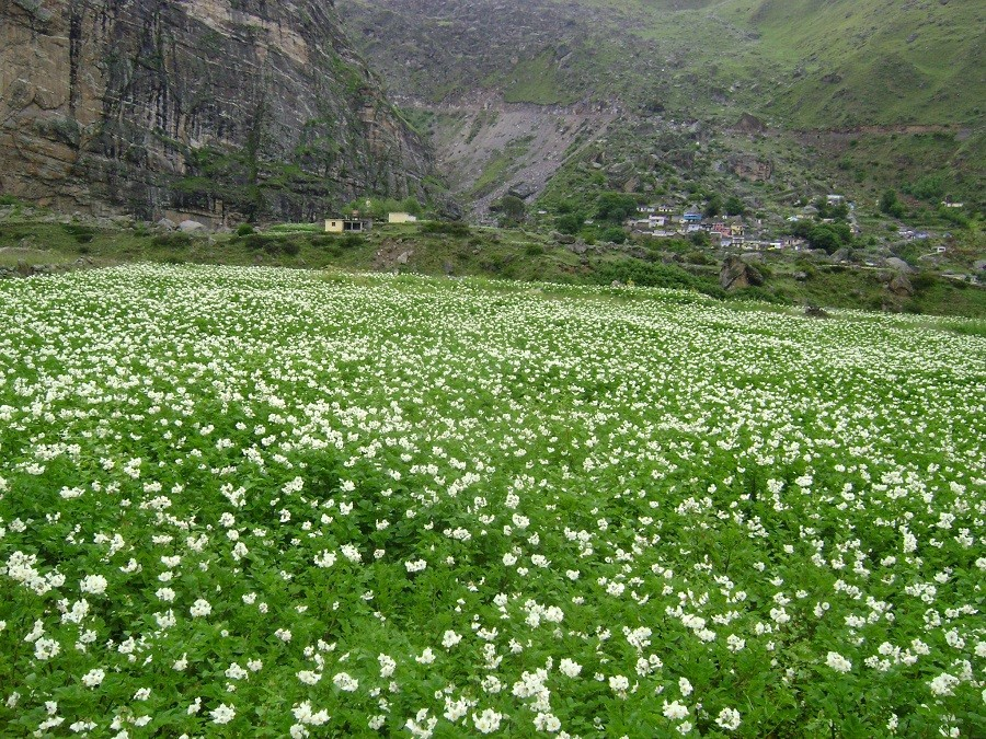 http://m.thegreatnext.com/Satopanth Lake Tal Trek Uttarakhand Mana Village Adventure Travel The Great Next