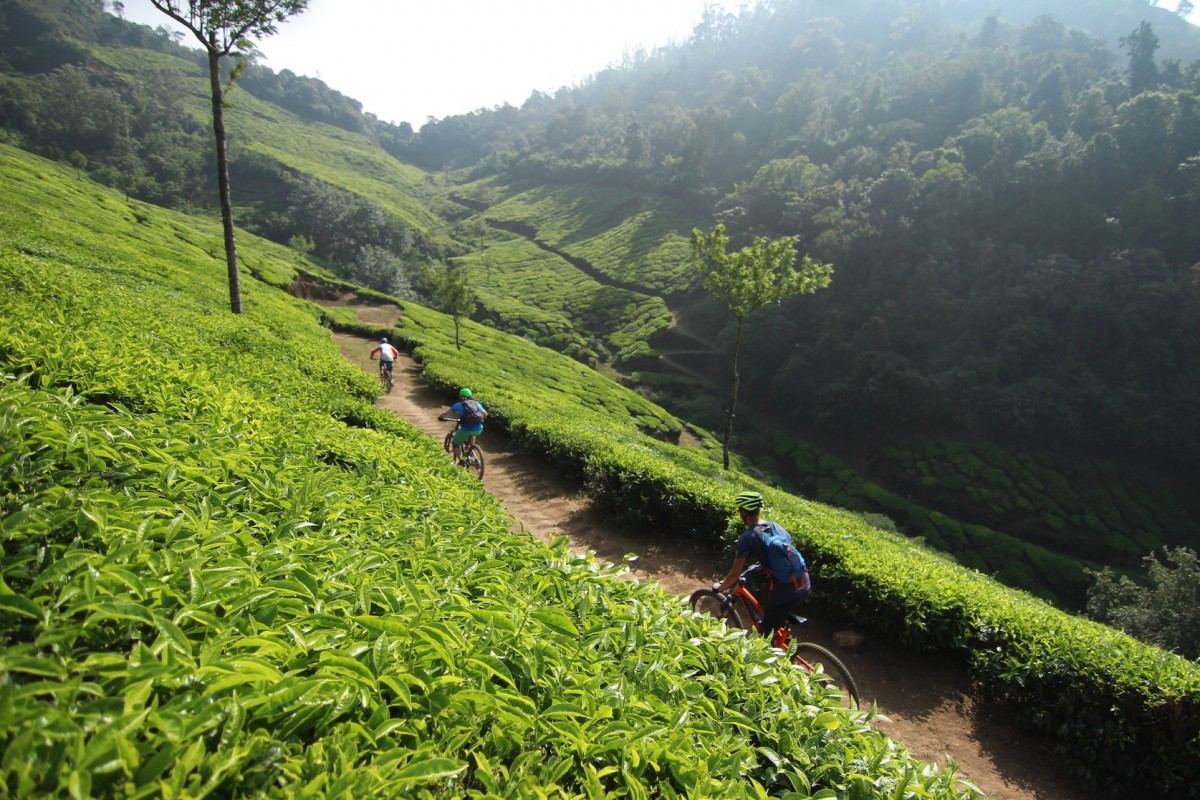 http://www.thegreatnext.com/Cycling Mountain Biking Idukki Kerala Tea Cardamom Plantation The Great Next