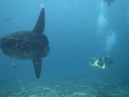 Discover Scuba Dive in Nusa Dua, Bali
