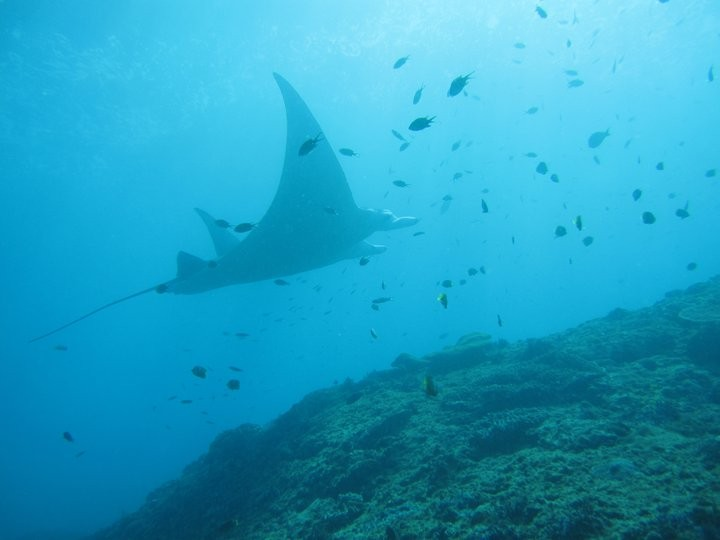 http://www.thegreatnext.com/Scuba Diving Bali Marine Life Underwater Corals Sea Creatures PADI AOWD Indonesia Adventure Travel The Great Next
