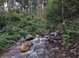 http://www.thegreatnext.com/Kotte Batte Hattihole Coorg Bangalore Karnataka Green Forest Trekking The Great Next