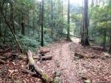/Kumara Parvatha Pushpagiri Wildlife Sanctuary Biodiversity Coorg Karnataka The Great Next