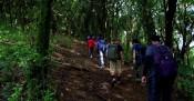 http://www.thegreatnext.com/Tadiandamol Coorg Karnataka Trekking Greenery The Great Next