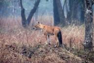 http://m.thegreatnext.com/Pench National Park Jungle Safari Night Safari Camping Madhya Pradesh  Adventure Travel The Great Next