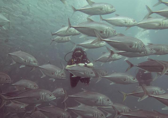 http://m.thegreatnext.com/PADI Open Water Diver Course Koh Tao Thailand Bangkok Scuba Diving Water Sports Adventure Travel