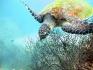http://www.thegreatnext.com/Koh Tao Snorkeling Thailand Water Sports Traveling Adventure Activities