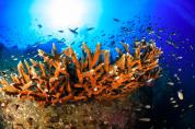 http://www.thegreatnext.com/Koh Tao Diving Bangkok Thailand Divers Water Sports Destinations Travel Adventure