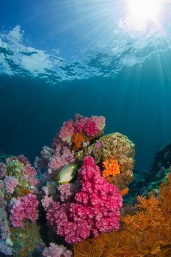 http://www.thegreatnext.com/Scuba Diving Whaleshark Thailand Koh Phangan Tao Ma Marine Life Underwater Corals Sea Creatures  Indonesia Adventure Travel The Great Next