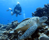 http://www.thegreatnext.com/Fun Diving Gili Air Bali Indonesia Travel Destinations Water Sports Scuba Diving Adventure