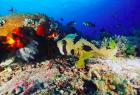 http://m.thegreatnext.com/Fun Diving Gili Meno Lombok Indonesia Travel Destinations Water Sports Scuba Diving Adventure