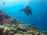 http://www.thegreatnext.com/PADI Advanced Open Water Diver course  Gili Meno Lombok Indonesia Travel Destinations Water Sports Scuba Course Adventure
