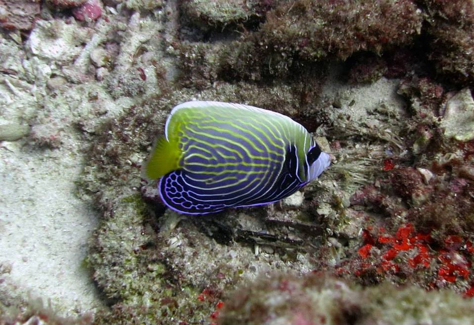 http://www.thegreatnext.com/Phuket Racha Yai Thailand Discover Scuba Diving PADI The Great Next