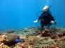 http://www.thegreatnext.com/Fun Dive Phuket Thailand Phi Phi Shark Point Scuba Diving The Great Next