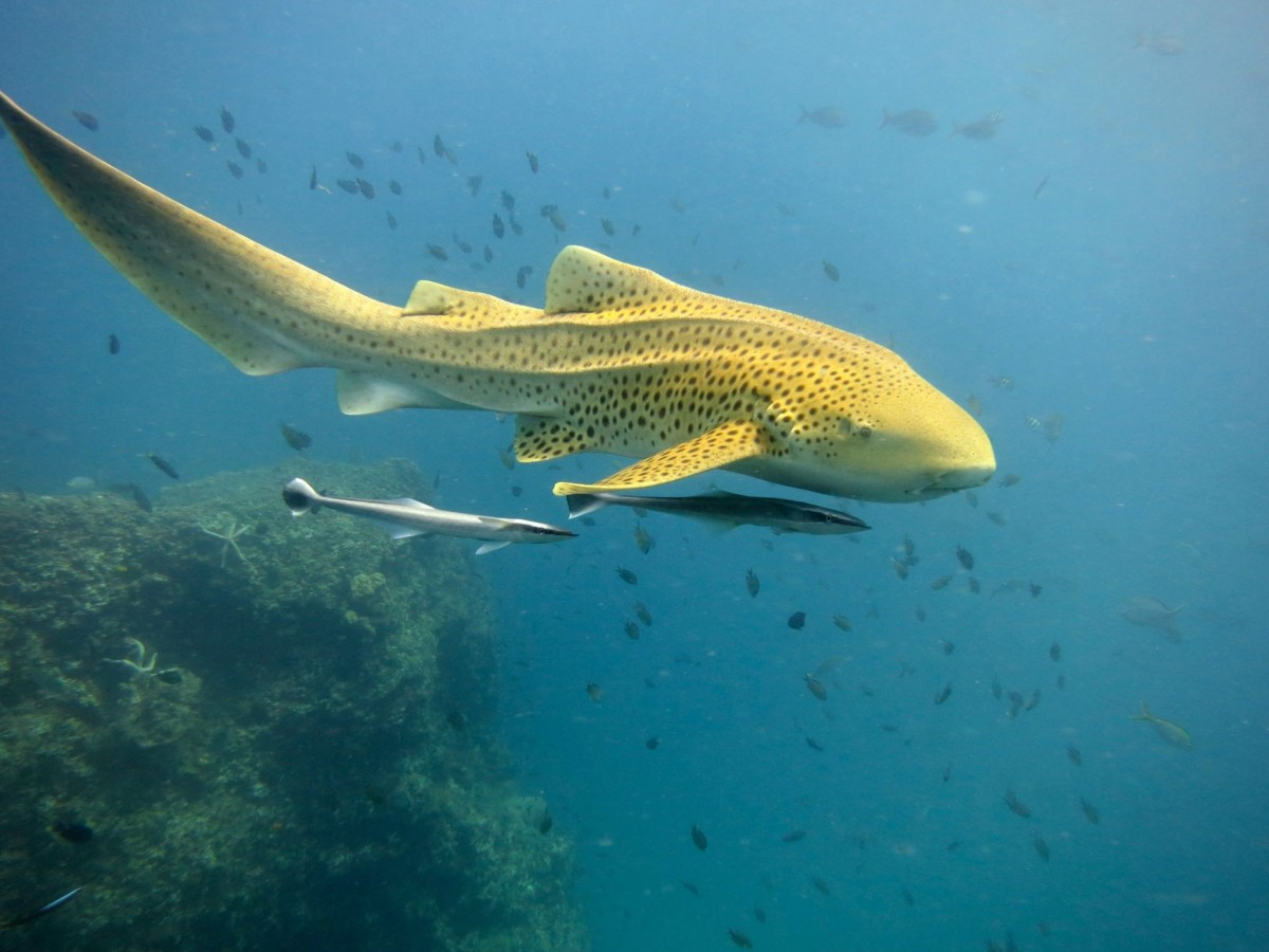 http://www.thegreatnext.com/PADI AOWD Advacned Open Water Diver Phuket Andaman Sea Scuba Diving The Great Next