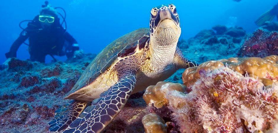 http://www.thegreatnext.com/Fun Dive Padangbai Bali PADI OWD Scuba Diving The Great Next