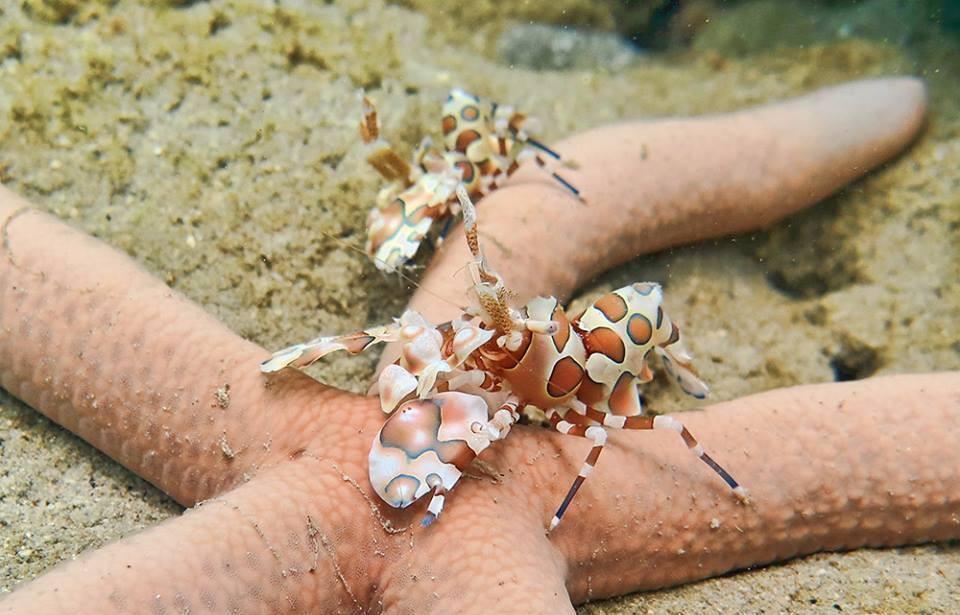 http://www.thegreatnext.com/Racha Noi Yai Islands Scuba Diving Phuket Discover The Great Next