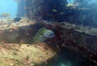 http://m.thegreatnext.com/Koh Doc Mai Shark Point King Cruiser Ship Wreck Scuba Diving Thailand Phuket The Great Next