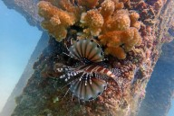 http://www.thegreatnext.com/Phi Phi Island Scuba Diving Thailand Phuket The Great Next