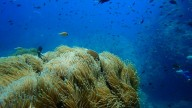 http://m.thegreatnext.com/PADI Scuba Diver Koh Samui Gulf of Thailand The Great Next