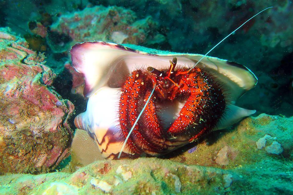 http://www.thegreatnext.com/PADI Scuba Diver Koh Samui Gulf of Thailand The Great Next