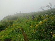 http://m.thegreatnext.com/Raireshwar Kenjalgad Flower Blooming Western Ghats Maharashtra Sahyadris Trek Shivaji Flowers Blooming Adventure Travel The Great Next