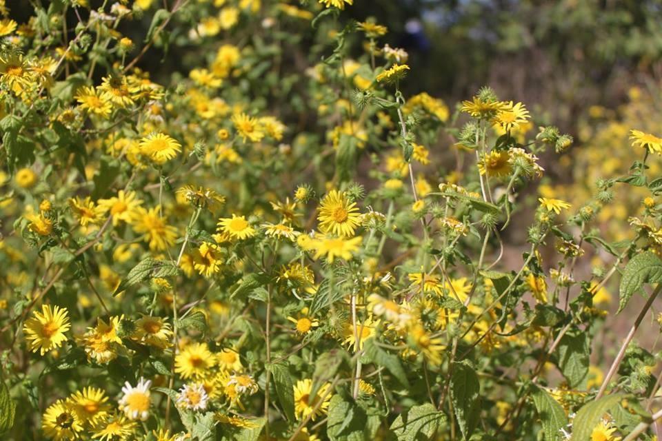 http://www.thegreatnext.com/Ratangad Fort Trek Shivaji Flowers Blooming Adventure Travel The Great Next