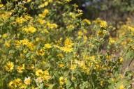 http://m.thegreatnext.com/Ratangad Fort Trek Shivaji Flowers Blooming Adventure Travel The Great Next