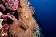 http://www.thegreatnext.com/Discover Scuba Diving Gili Trawangan The Great Next