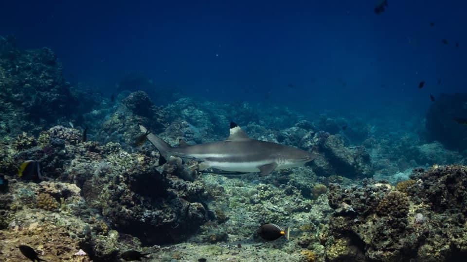 http://www.thegreatnext.com/PADI Open Water Diver Course Scuba Diving Gili Trawangan Bali The Great Next