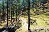 http://www.thegreatnext.com/Binsar Wildlife Sanctuary Camping Kumaon Uttarakhand India The Great Next