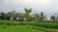 http://www.thegreatnext.com/Bali Ubud Kintamani Cultural UNESCO Cycling Tour Adventure Travel The Great Next
