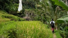 http://m.thegreatnext.com/Bali Ubud Kintamani Cultural UNESCO Cycling Tour Adventure Travel The Great Next