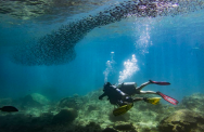 http://m.thegreatnext.com/PADI Advanced Open Water Diver course in Koh Phi Phi Thailand Water Sports Adventure Travel