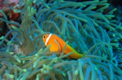 http://www.thegreatnext.com/Try Dive Discover Scuba Diving Andaman Havelock Island Underwater Sea Creatures Adventure Travel The Great Next