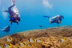 Fun Diving in Racha Yai and Racha Noi
