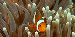 http://www.thegreatnext.com/Discover Scuba Diving Andaman Adventure Sea Water Sport