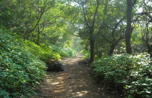 Weekday trek to Rajmachi