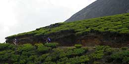 http://www.thegreatnext.com/Kerala Cycling Adventure Munnar Tea Estates Mountain Biking