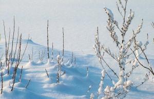 Snow Trek to Goechala