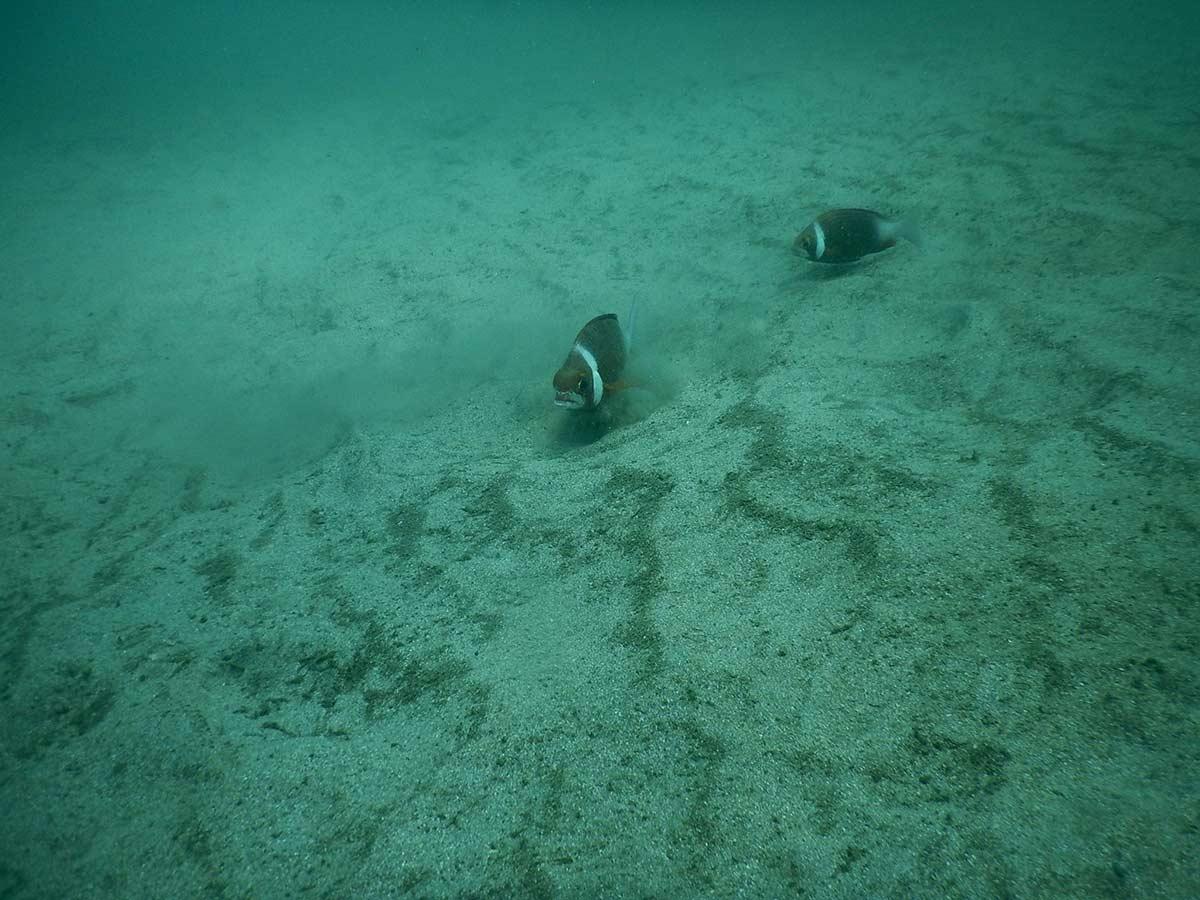 http://www.thegreatnext.com/Goa Scuba Diving Adventure