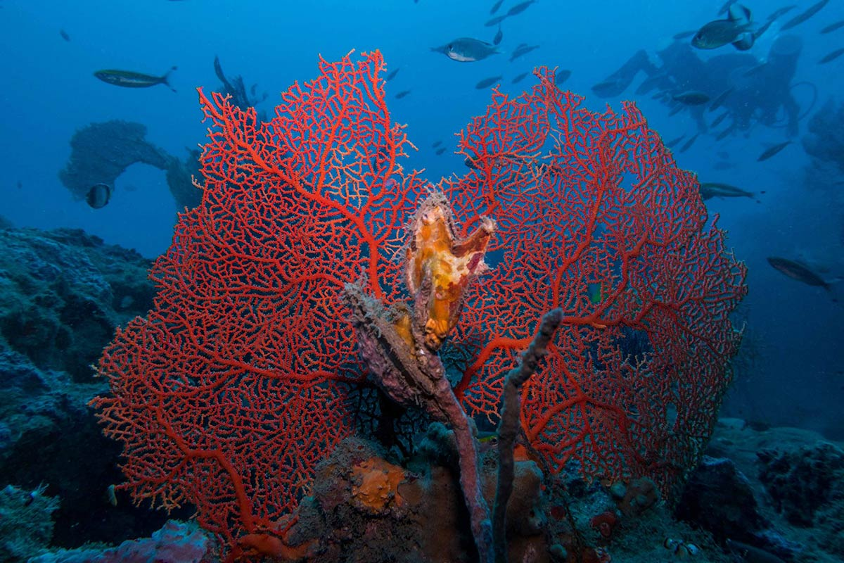 http://www.thegreatnext.com/Pondicherry Scuba Diving Adventure India Scuba Discover Scuba PADI