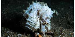 http://m.thegreatnext.com/Pondicherry Scuba Diving Adventure India Scuba Discover Scuba PADI