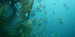 http://www.thegreatnext.com/Pondicherry Scuba Diving Adventure India Scuba Discover Scuba PADI