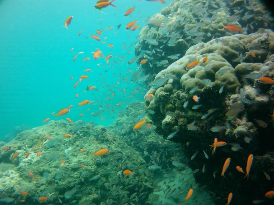 http://www.thegreatnext.com/Andaman Islands Scuba Diving Adventure Discover Scuba DSD Havelock
