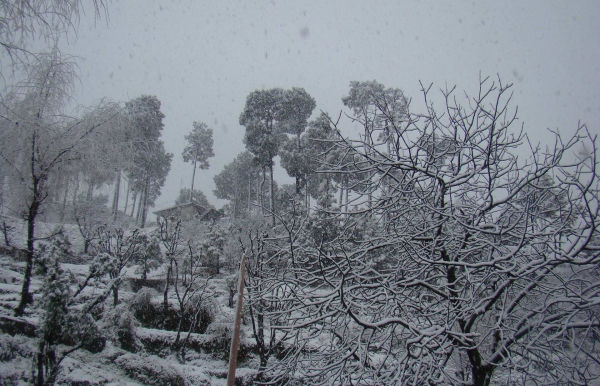 Dhauladhar Snow Adventure (Ex-Pathankot)