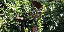 http://m.thegreatnext.com/Camping Campsite Corbett Nature Wildlife Himalayas Kumaon Uttarakhand