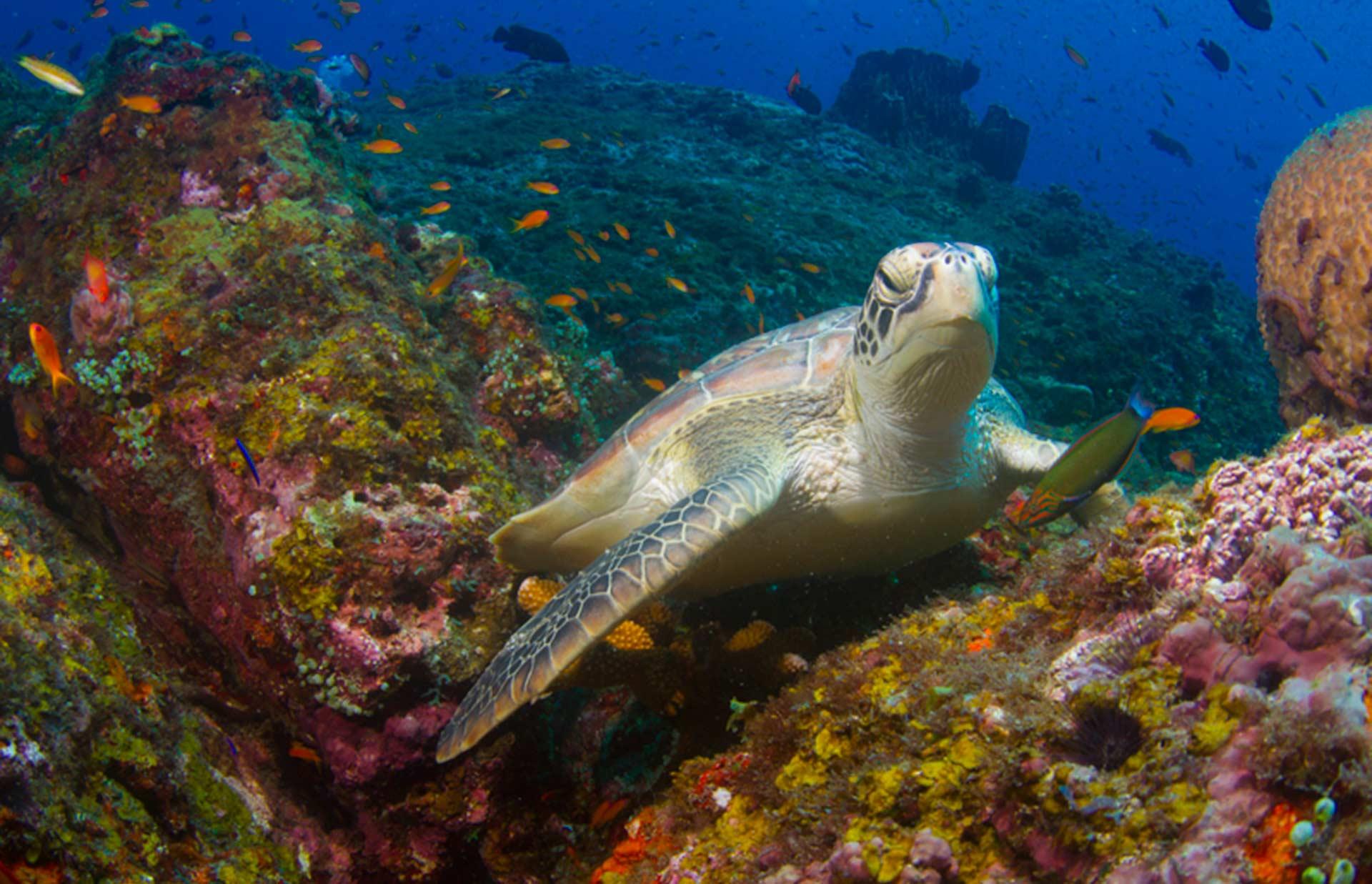 http://www.thegreatnext.com/Scuba Diving Andamans Adventure Scuba Ocean Havelock Sea Open Water PADI SSI Course